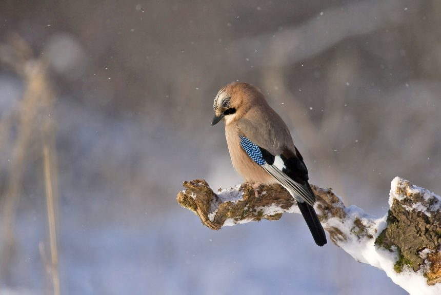 2018 – Годината на птиците