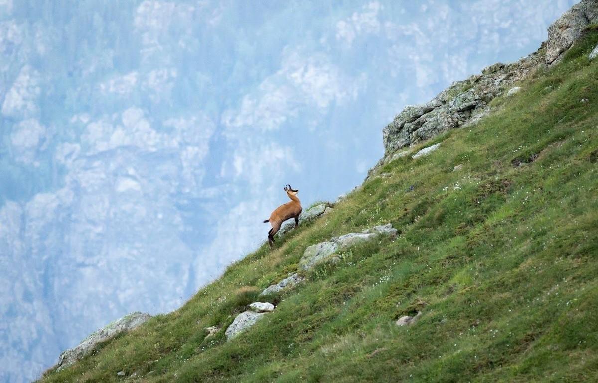 """Биомониторинг в Национален парк """"Централен Балкан"""""""