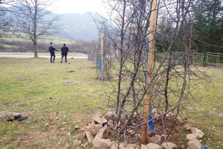 Successful fencing of our trees using Jerusalem thorn