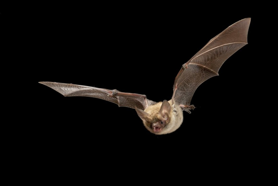 Of Bats and Men