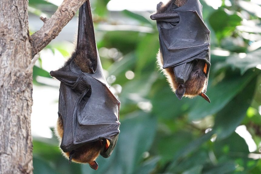 Why Bats Are One of Evolution's Greatest Puzzles