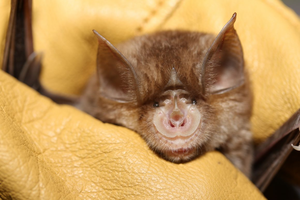 Bats and men – sharing life under one roof