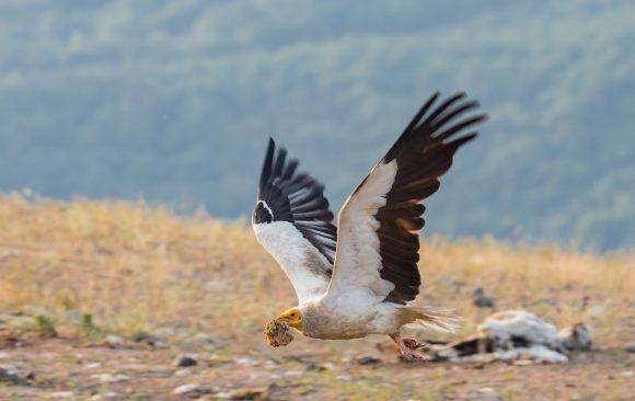 Как лешоядите допринасят за нашата околна среда?